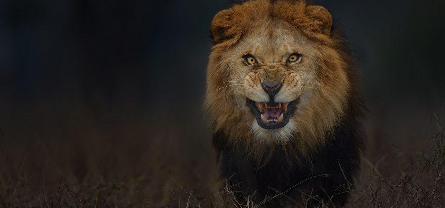 Muito 13 maneiras de sobreviver a um ataque de um animal selvagem SW47