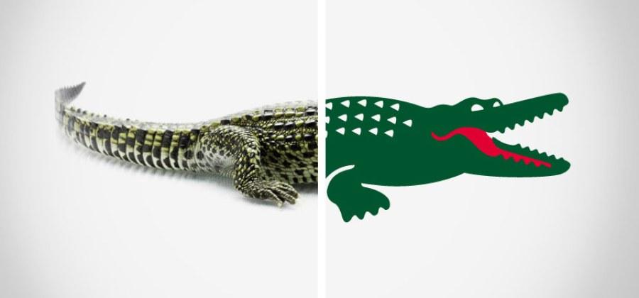 1513a25a252 Foi por esse motivo inusitado que a Lacoste removeu o crocodilo de sua logo