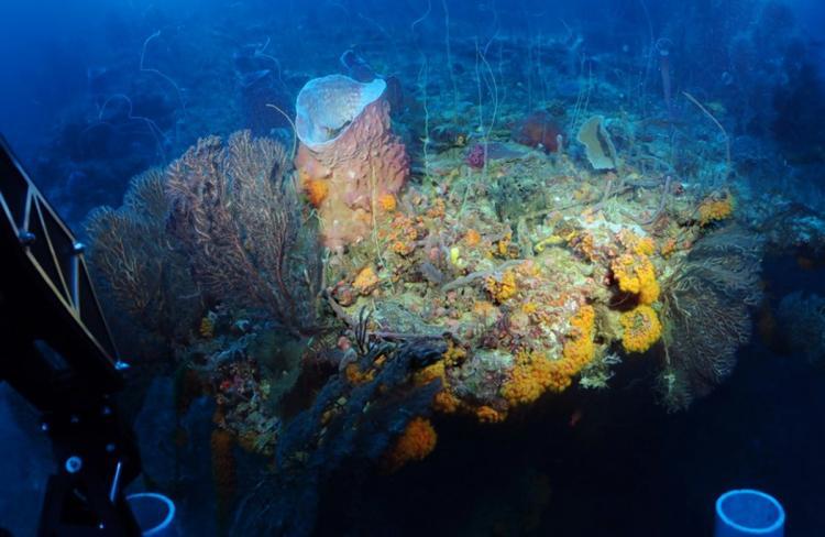 Cientistas descobriram uma nova zona secreta no oceano cheia de espécies desconhecidas