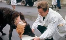 Conheça a história triste do cachorro russo de duas cabeças