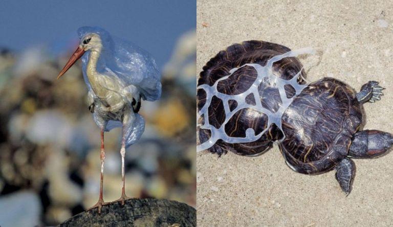 15 imagens chocantes que mostram como o lixo afeta o Reino Animal