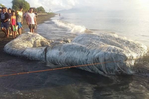 180515 Sea Creature Washes Up Beach 01 600x400, Fatos Desconhecidos