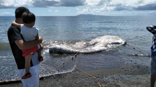 180515 Sea Creature Washes Up Beach 02 600x338, Fatos Desconhecidos