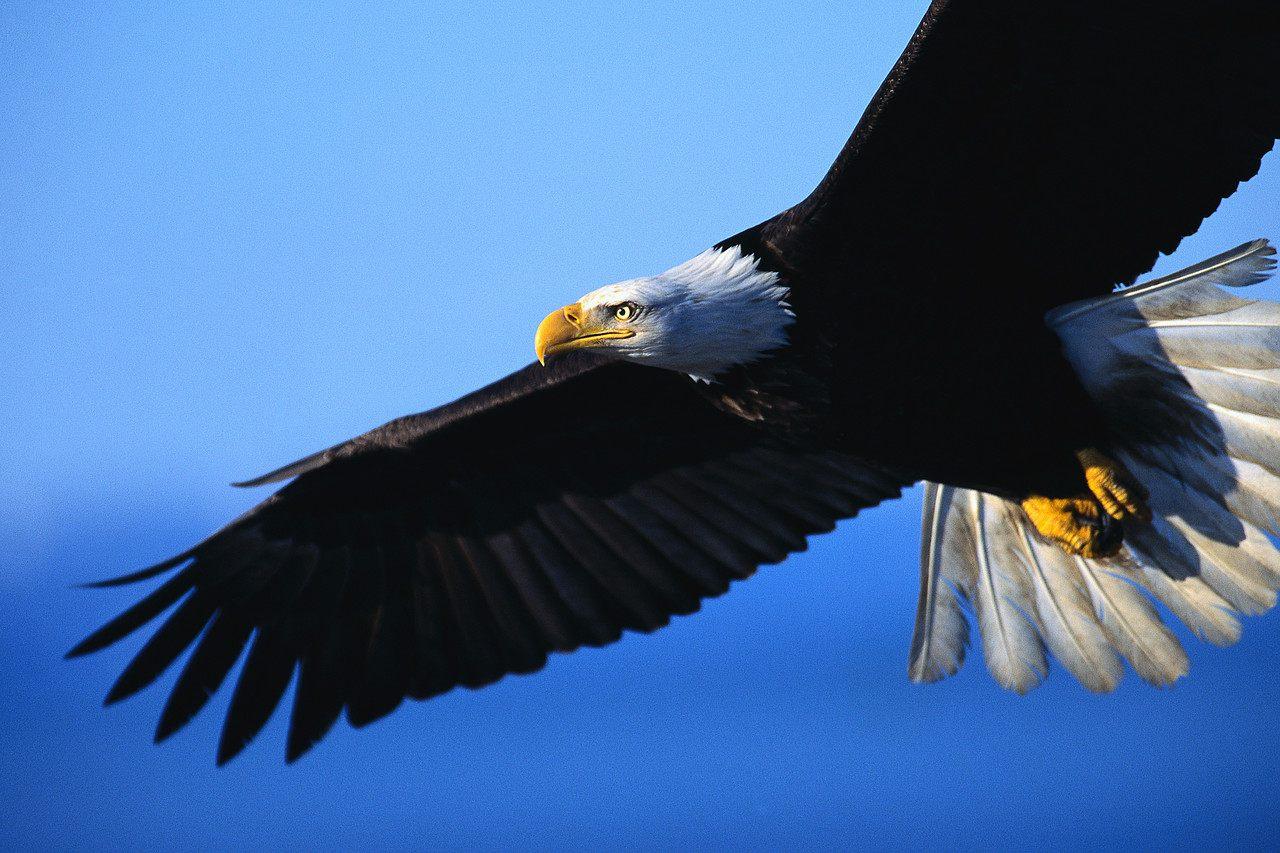 7 espécies de animais que foram salvas da extinção graças ao ser humano
