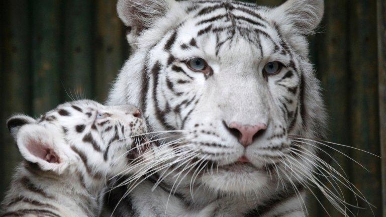7 animais de estimação mais raros e caros do mundo