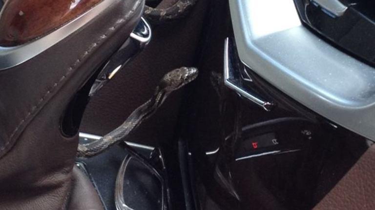 Essa mulher teve uma surpresa terrível enquanto estava dirigindo