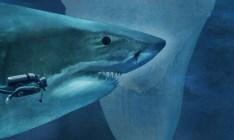 12 imagens impressionantes que mostram o real tamanho de algumas espécies de tubarões