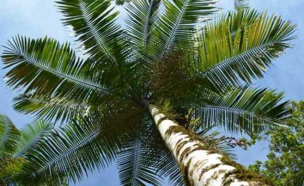 Palmeira 600x368, Fatos Desconhecidos