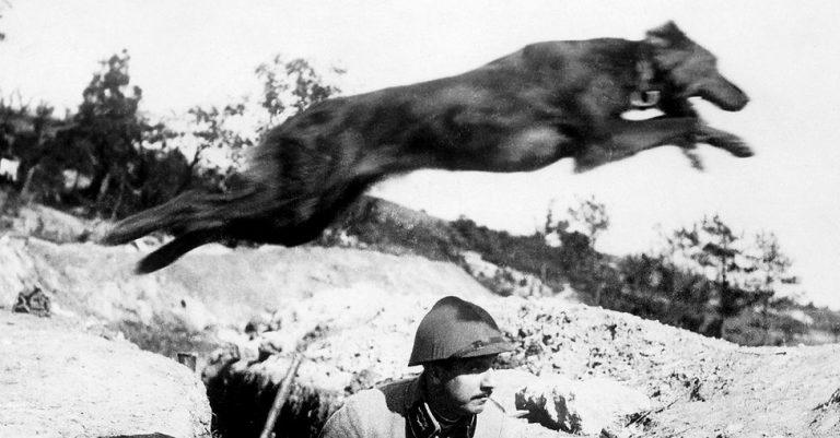 7 cachorros heróis da Primeira Guerra Mundial