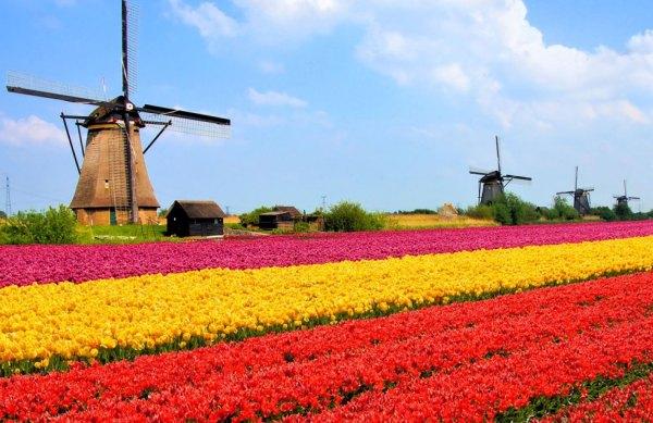 Holanda 600x389, Fatos Desconhecidos