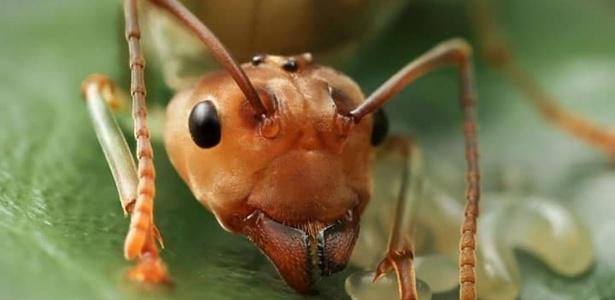 7 insetos com comportamentos estranhos
