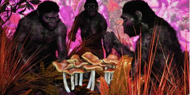 7 drogas utilizadas por civilizações antigas
