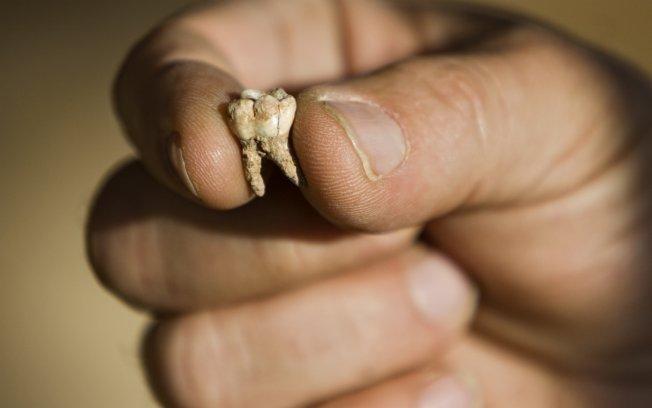 Dente humano é encontrado em liquidificador e existe uma história cruel por trás disso