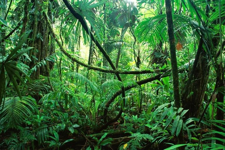 7 coisas que fazem da Amazônia um lugar único no mundo