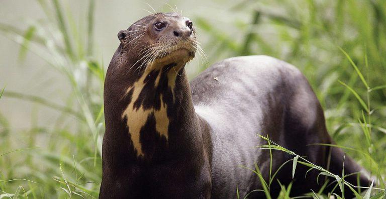 7 animais incríveis que você só pode encontrar na América do Sul
