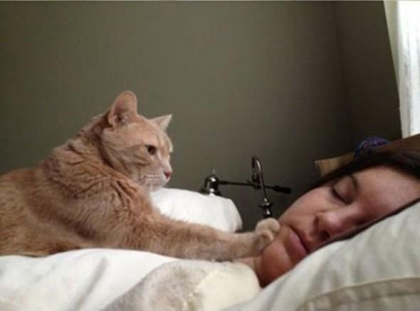 Gato Acordando, Fatos Desconhecidos