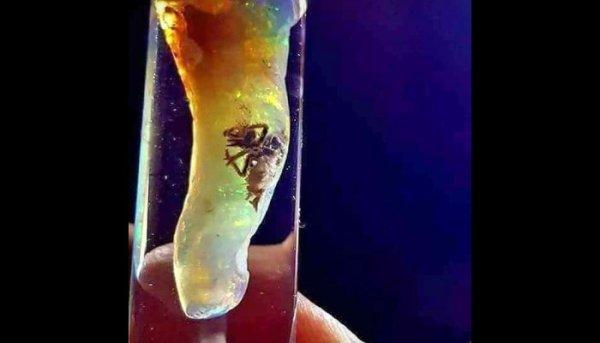Opal Insec Specimen Scale 600x343, Fatos Desconhecidos