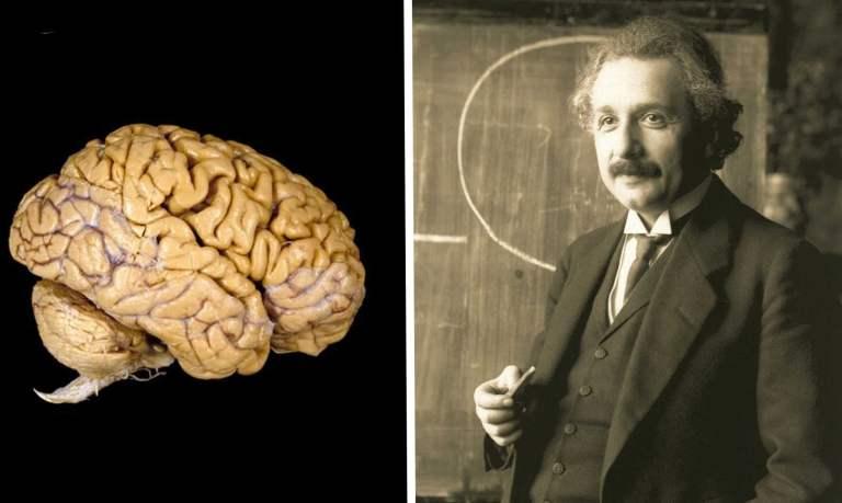 A diferença do cérebro de um gênio e do seu