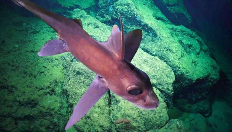 Cientistas descobrem novos animais que parecem de outro mundo nas profundezas do mar