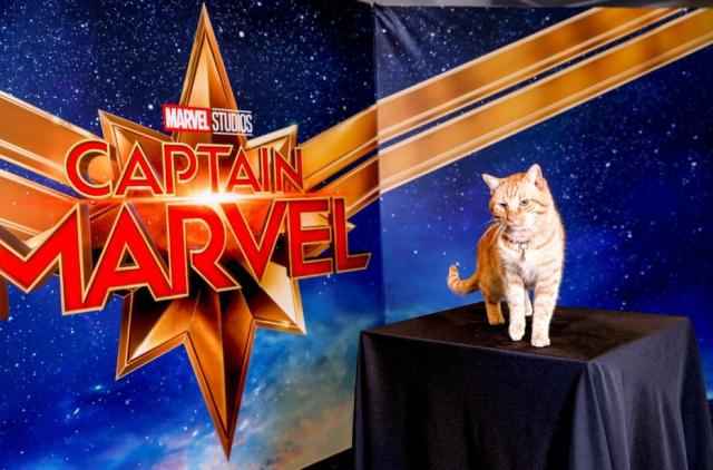 Campanha do filme Capitã Marvel arrecada doações para institutos protetores dos animais