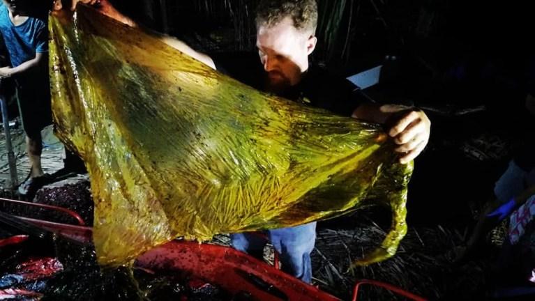 Baleia encontrada morta com 40 kg de plástico mostra triste tendência para o meio ambiente