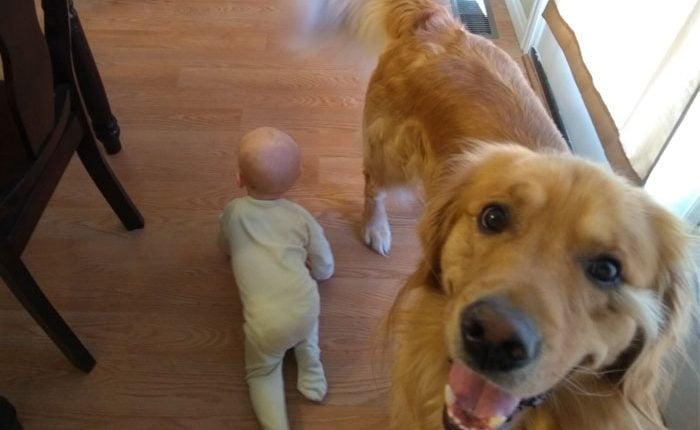12 tirinhas hilárias de como é a vida de um bebê e seu grande cachorro
