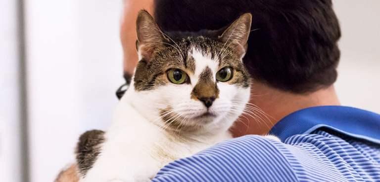 Se seu gato é estranho, ele apenas está se inspirando em você