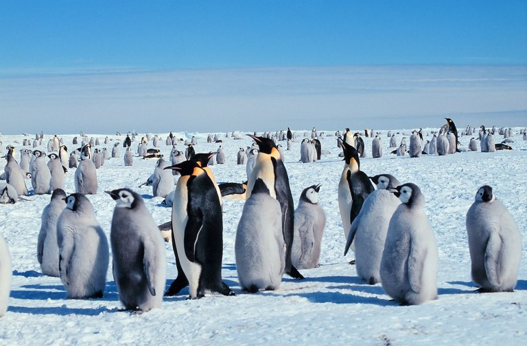 Milhares de pinguins morreram graças a desastres ambientais na Antártida