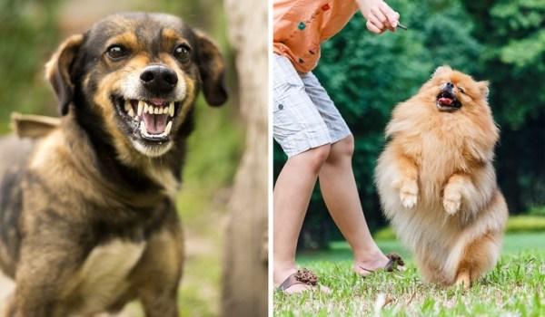 Cachorro Agressivo 600x350, Fatos Desconhecidos