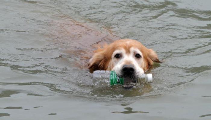 Conheça o cachorro que limpa um rio chinês há 10 anos