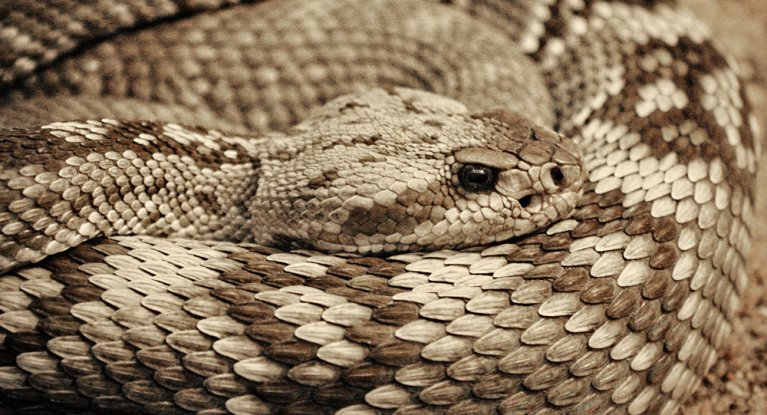Por que um antigo nativo americano comeu uma cobra venenosa inteira?