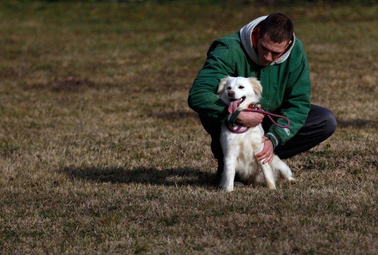 Cachorros são usados em presídios contra mau comportamento e o resultado não poderia ser diferente