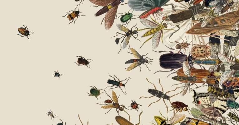 7 coisas que aconteceriam se os insetos não existissem no planeta