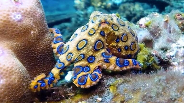 7 criaturas dos oceanos que são muito mais perigosas que os tubarões