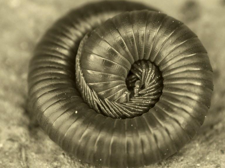 Cientistas descobriram criatura fossilizada de 99 milhões de anos
