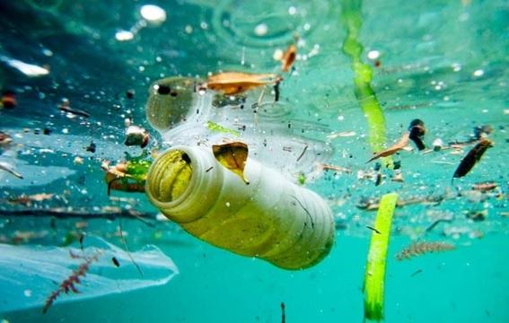 Microrganismo pode ser a solução para a poluição nos oceanos