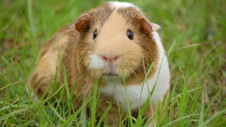 7 animais estranhos comidos em outros países