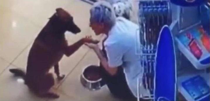 Vídeo mostra cão machucado pedindo ajuda em farmácia
