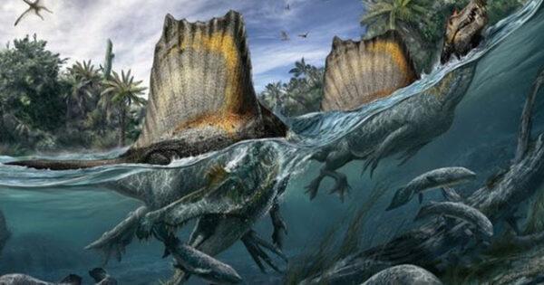 Fóssil Espinossauro 600x315, Fatos Desconhecidos