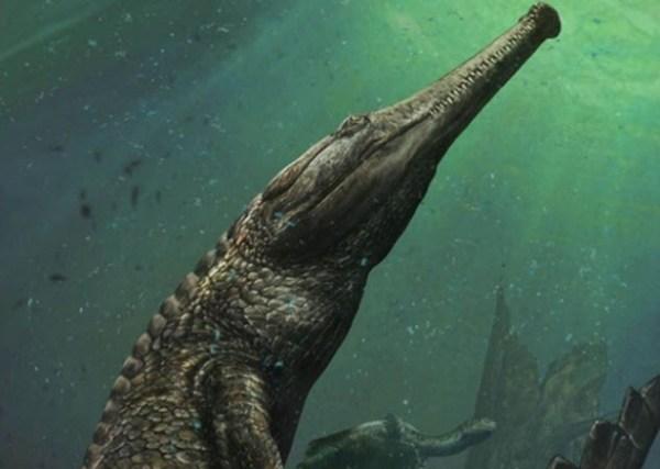 Crocodilo 1 600x427, Fatos Desconhecidos