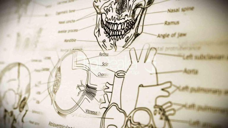 7 fatos incríveis sobre algumas partes do nosso corpo