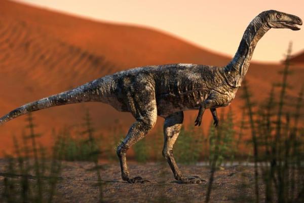 Dinossauro 600x400, Fatos Desconhecidos