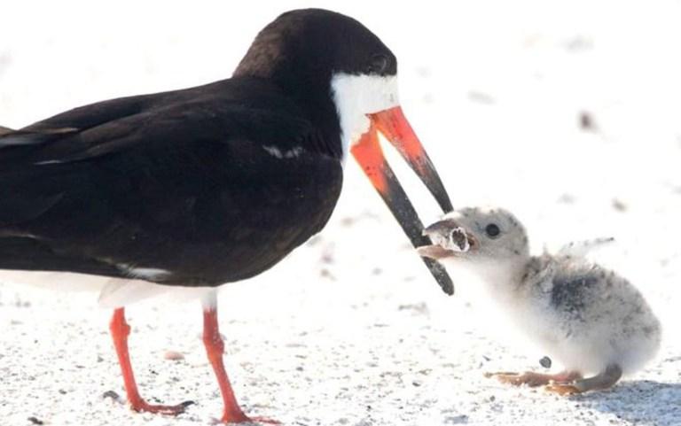 A história por trás da foto chocante de um pássaro alimentando seu filhote com um cigarro
