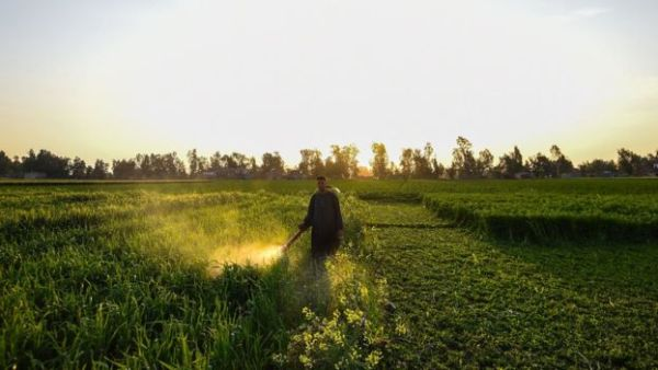 108378056 Pesticidespray 600x338, Fatos Desconhecidos