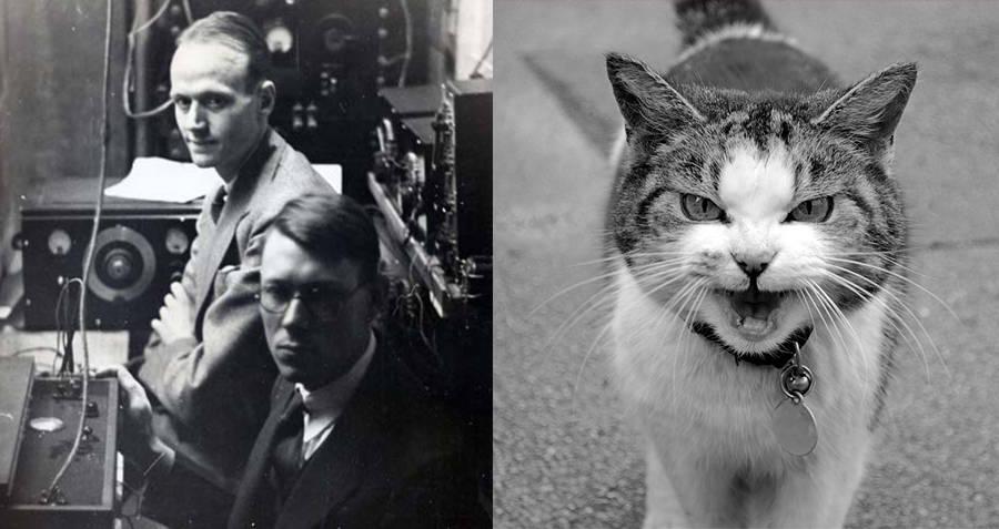 Coisas Totalmente Insanas Que Ja Fizemos Com Gatos 1, Fatos Desconhecidos