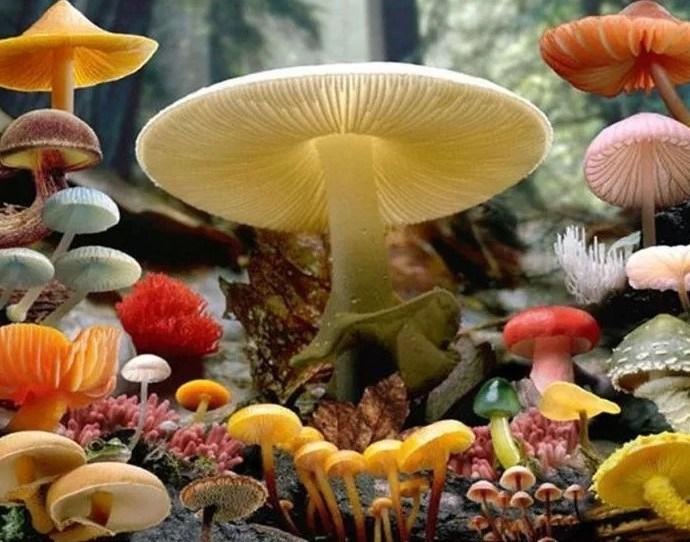 Você sabia que alguns cogumelos são carnívoros?