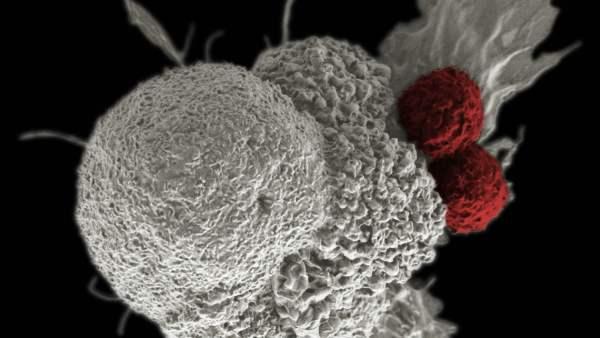 Tratamento Cancer 600x338, Fatos Desconhecidos