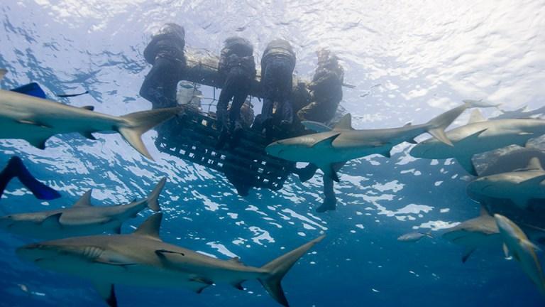 O pior ataque de tubarões de todos os tempos foi assustador