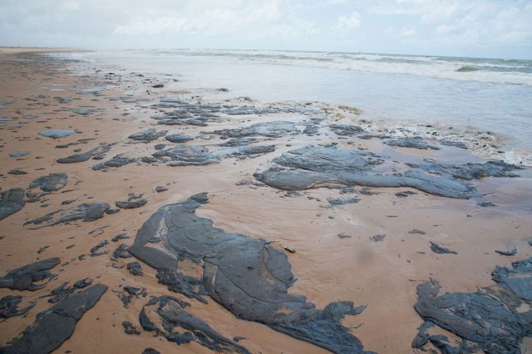 Derramamento de óleo coloca em risco a vida marinha no nordeste brasileiro
