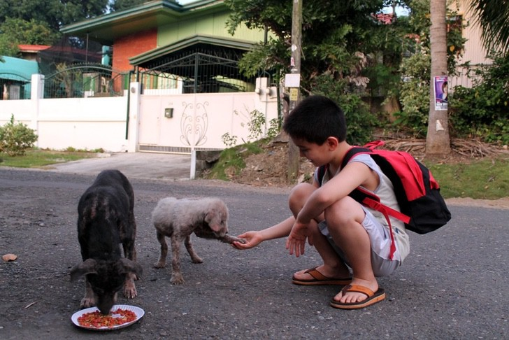 Com 9 anos, ele guardou suas economias para alimentar cachorros